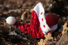 Just for you. Signed: Santa :)) (carlo612001) Tags: chistmas xmas robin red gift gifts wood nature birds bird happy happychistmas merry merrychistmas holy joy enjoy happyness