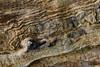 Jupiter (Raphs) Tags: jægersborgdyrehave denmark danmark wood oak gnarled weathered grain texture structure raphs canoneos70d swirl sigma30mmf14dchsmart