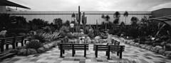 Changi Airport Cactus Garden i (@fotodudenz) Tags: hasselblad xpan film rangefinder 30mm ultra wide angle panorama panoramic 2017 singapore changi airport ilford xp2 super cactus garden