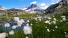 Wanderurlaub auf der Rudolfshütte - Wanderung vom Enzingerboden über den Tauernmoossee zur Rudolfshütte (gernotp) Tags: berg natur ort rudolfshütte salzburg urlaub uttendorf wandern wanderurlaub wasser grl5al grv4al österreich