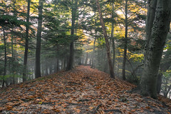 Autumn Trail (golferboy2321) Tags: autumn fall lakeharborpark muskegon michigan woods nature