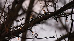 hidden lights (theflyingtoaster14) Tags: hidden versteckt lights lichter weihnachten christmas end year silvester äste tree bokeh canon g3x