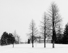 """Winter walk • <a style=""""font-size:0.8em;"""" href=""""http://www.flickr.com/photos/10545530@N06/39390424701/"""" target=""""_blank"""">View on Flickr</a>"""