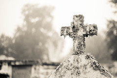 elevated (haint_blue) Tags: canon mississippi baystlouis cemetery graveyard grave cross lichen tomb tombstone fog foggy monochrome blackandwhite bw grey gray