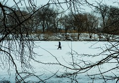 Branching In / Chicago (thedailyjaw) Tags: chicago snow icy cold freezing blue tint branches trees d610 hockey nike lone profile walk stroll winter wonderland illinois newyearseve city lincolnpark lincoln park skate skates