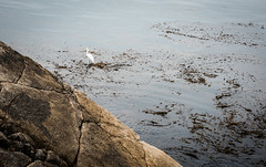 2017-AugSep-California-352 (4x4Foto) Tags: california loverspoint montereybay pacificgrove pacificocean aquarium beautiful beauty centralcoast cypress flowers nature plants redwoods rocks seagulls seals seaside sunset trees villages water virginia unitedstates