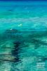 Serpiente de mar (Andres Breijo http://andresbreijo.com) Tags: mar sea transparente transparent cristalina agua water isla island costa coast formentera baleares balearic