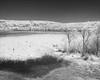 lysterfield-1321-ps-w (pw-pix) Tags: lake dam reservoir weeds reeds birds swamphens purpleswamphens porphyrioporphyrio hill trees mud plants grass sunny hot summer sky bw blackandwhite monochrome sonya7 irconvertedsonya7 850nminfrared ir infrared lysterfieldlake lysterfieldpark lysterfield narrewarrennorth narrewarren victoria australia peterwilliams pwpix wwwpwpixstudio pwpixstudio