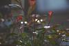 Backlight (herman hengelo) Tags: backlight tegenlicht tuin garden sunshineinwinter hengelo thenetherlands teleobjective laagstaandezon
