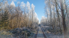 Frosty Forest (joseph_donnelly) Tags: forest wald frost frosty reif track bayern bavaria trees sky
