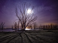 A la sombra del árbol muerto (karinavera) Tags: longexposure night photography ilcea7m2 moonlight epecuen tree milkyway abandoned dead sky stars