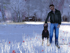 Brave Doberman (Sebast V. Nephelym) Tags: lb ad dog doberman pose animation authentic man static four modulus jacket alex hair swear dexter arnold black blue sneakers brave christmas snow winter mary rêves perdus top low brown jeans pants