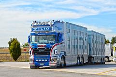 Scania R580 V8 Zilio Livestock (Samuele Trevisanello) Tags: scania r580 v8 zilio livestock v 8 r 580 transport italia veneto brescia est international truck trucks day scaniapower fotobyst nikon d3200 holland style white look light michelin
