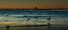 Incoming (beachpeepsrus) Tags: water westcoast white longbeachcalifornia longbeachgranprix light shore sky shorefront sunset beachfront birds beach rynchopsniger tug