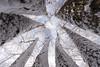 20171225 (Homemade) Tags: snow winter tree treetrunk whitechristmas christmas sigma1020mm park preserve onatrufarmpark onatrupreserve newyork westchestercounty ny lewisboro southsalem