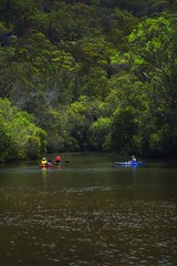Kayaking in Berowra Creek (Wajahat Mahmood) Tags: berowravalleynationalpark berowrawaters berowracreek kayak kayaking nikond810 googlenik water river sydney australia crosslandsreserve nsw newsouthwales