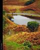Tornant a Fairy Glen... (Felip Prats) Tags: escocia scotland escòcia fairyglen autumn tardor otoño skye