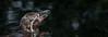 penguin (Nik He) Tags: schwarz schwimmen spiegelung schatten blatt blätter wasser pinguin black shadow leaf water swim 18250 700d canon bremerhaven penguin