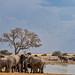 Elephants leaving and quelea flying