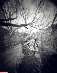 Glendon forest shadows (DelioTO) Tags: 4x5 autaut blackwhite canada d23 f140 fall fomapan100 landscape november ontario pinhole rural toned winter