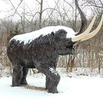 1491ex  It's so cold--the woolly mammoths are iced over! thumbnail