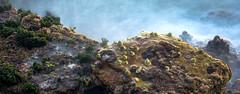 Kirribilli rocks (StefanKleynhans) Tags: nikon d7100 rocks grass shell ocean waves longexposure long exposure mystical color colour green yellow brown blue plants coast 50mm