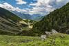 Lirios en flor, Valle de Chistau (sostingut) Tags: d750 nikon pirineos chistau españa valle verano flor flores