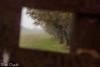 In frame (paolotrapella) Tags: frame cornice alberi canoneos tamron paolotrapella nature