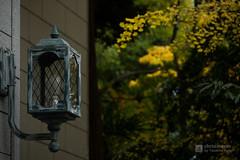 Lamp of Fukagawa Library (深川図書館) (christinayan01 (busy)) Tags: fukagawa library fall autumn ginkgo leaf leaves architecture tokyo japan