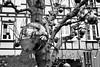 Reflet (davidpaltz) Tags: arbres boules noel monochrome mirroir