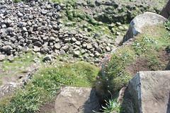 IMG_3425 (avsfan1321) Tags: ireland northernireland countyantrim unitedkingdom uk giantscauseway causewaycoast wildatlanticway basalt rock stone blackbasalt column columnarjointing columnarbasalt ocean atlanticocean landscape