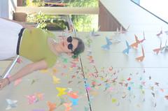 DSC_5299 (noahandrewsphotography) Tags: sarah butterfly origami wall spring 2017