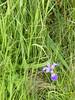 ParcForillon17 (alicia.garbelman) Tags: quebec gaspesie parcforillon stlawrenceriver