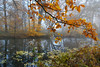 Autumn forest silence (Liwesta) Tags: autumn silence river trees branch twig leaves fog mood misty quiet