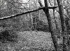 Tree with broken branch resting (Hyons Wood) (Jonathan Carr) Tags: tree ancientwoodland ddx monochrome black white bw 6x45 mediumformat rural northeast