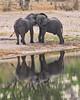 Elephant fun (NettyA) Tags: 2017 africa africanelephant bwabwatanationalpark caprivistrip kibokoadventures namibia animal elephants reflection safari travel wildlife playing waterhole water