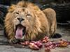 Lion (Esther Kluth) Tags: 2017 stuttgart wilhelma flickrtreffen2017dez10 flickrbigcats