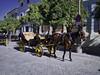 Un Paseo por Sevilla (César Vega-Lassalle) Tags: sevilla españa spain olympus omd em5 carruaje microfourthirds m43 lumix leicadg
