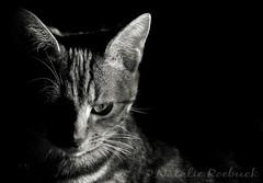 Jen (ambeizzi) Tags: jen jenny jennifer cat pussycat pussy feline monochrome black white