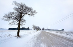 Somewhere My Love (Anthony Mark Images) Tags: road tree snow farmfield cold telephonepoles hydrolines rural bushline forest countryhouse barn winter bare naked baretrees ontario canada bluewater abigfave countryroad stark flickrclickx