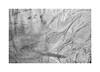 (billbostonmass) Tags: adox silvermax 100 film 129silvermax1100min68f fm2n 40mm ultron epson v800 massachusetts roxbury