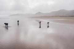 Ocean Beach (bruit_silencieux) Tags: oceanbeach ocean beach pacific newzealand hawkesbay nature landscape cloudy sonya7 sigma35mm14art dogs
