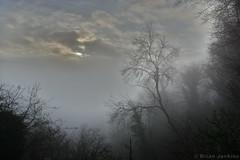 Sunrise Tree (Bri_J) Tags: llandogo monmouthshire wales uk countryside nikon d7200 sunrise tree mist sun