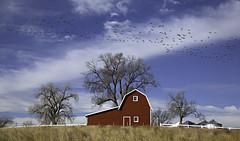 the barn on the hill (eDDie_TK) Tags: colorado co weldcountyco weldcounty johnstownco meadco coloradoseasternplains coloradosfrontrange rural rurallife ruralliving redbarns barns