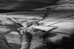 Hursthead Cote (l4ts) Tags: landscape derbyshire peakdistrict darkpeak derwentedge upperderwentvalley blackwhite monochrome crookhill hurstheadcote barn trees drystonewalls sheep