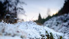 mini landscape with Cokin grad filter (grahamrobb888) Tags: nikon nikond800 d800 nikkor50mmf18 cokin graduatedfilter nikkor winter cold snow snowwoods birnamwood highlands bokeh trees peaceful quiet reflective remote