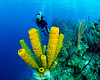 2017_-49 (kryn13) Tags: 2017 belize sponge turneffe