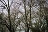 Winter Mood (Elowi) Tags: winter seasons jahreszeiten baum tree bäume trees wald forest wood holz schnee snow colors farben äste ast branch branches blatt blätter leafs leaf sony alpha6000 alpha sonyalpha sel90m28g makro macro
