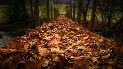 Pont de feuilles mortes (Koperpix) Tags: countryside rural leafs quercy bridge autumn