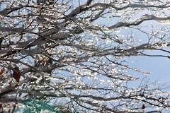 Ice Crystal (Read2me) Tags: snow winter pree cye white branch tree ice bokeh dof thechallengefactorywinner ge